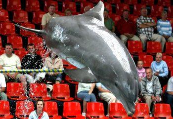 Протестиращи поискаха затваряне на варненския делфинариум