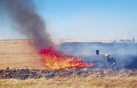 250 дка с посеви с царевица изгоряха в село Милковица