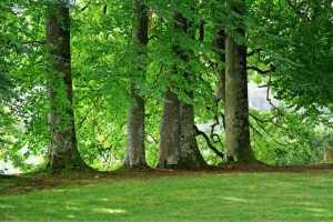 Учени създадоха изкуствено листо, което преобразува въглероден диоксид в гориво