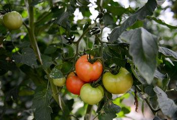 Земеделци кандидатстват за субсидии с несъществуващи зеленчуци