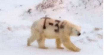 Вандали написаха с черен спрей името на танк върху полярна мечка