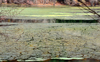 Панчаревското езеро се заблатява, спасение не се вижда