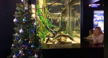 Аквариум използва риба, за да захранва с ток лампичките на коледна елха