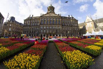 Площад в Амстердам бе застлан с килим от лалета