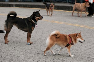 В Хонконг регистрираха второ куче заразено от новия коронавирус