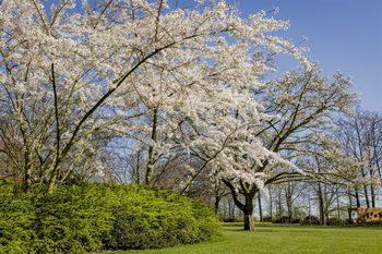 Пролетният парк на Нидерландия няма да отвори за първи път в историята си