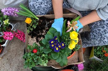 Британският градинарски сектор може да бъде заличен за няколко седмици от коронавируса